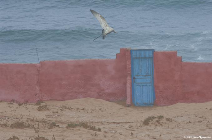 Voir Essaouira et renaître…