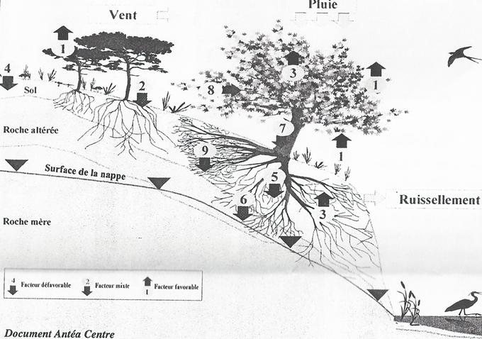 Les plantations de coteau et les troglos