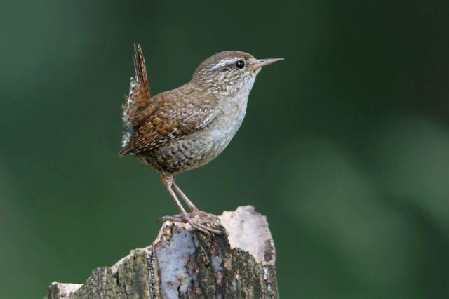 ASPO/Birdlife
