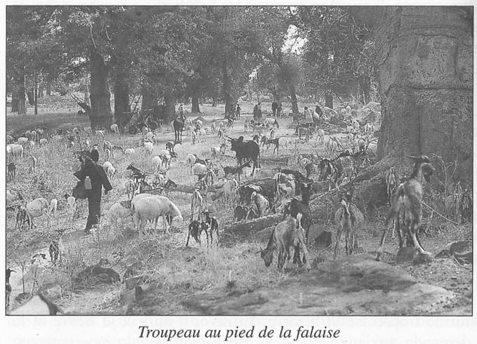 Contes et légendes troglos (2) : Le pays Dogon (suite et fin)