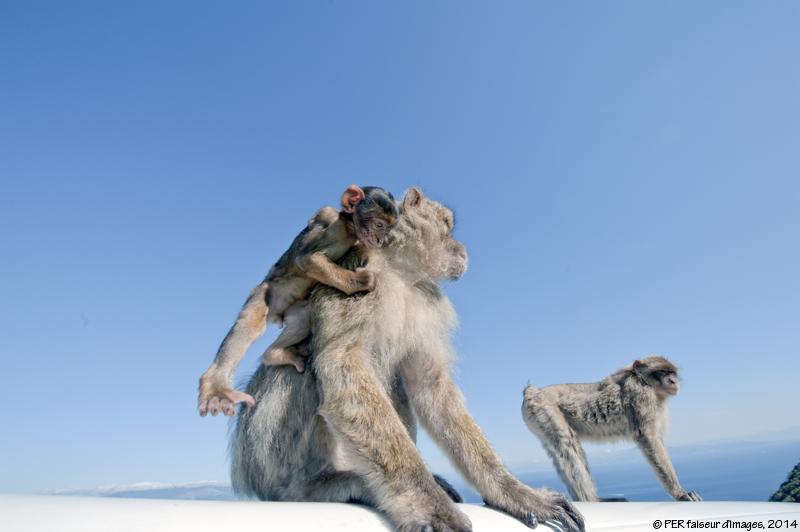 Ces drôles d'animaux...1
