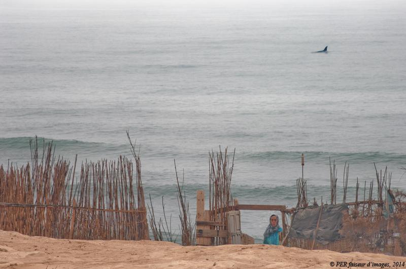 Ces drôles d'animaux (2) : une baleine à Aglou !