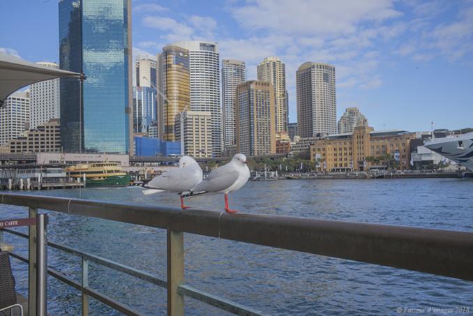 Sydney, métropole moderne
