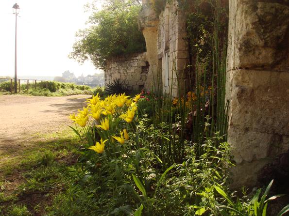Réflexe citoyen à Montsoreau