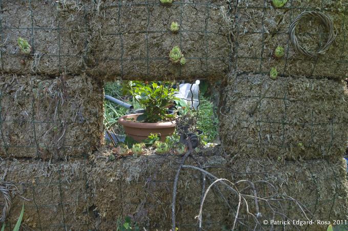 un mur végétal à l'essai trône dans le jardin.