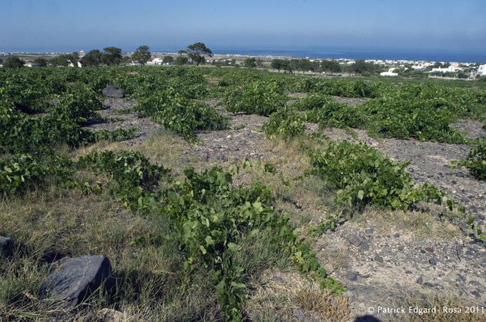 L'art du vin en troglo, Santorin