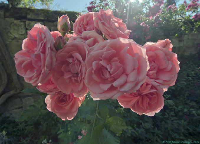 Mignonnes, allez voir si les roses…