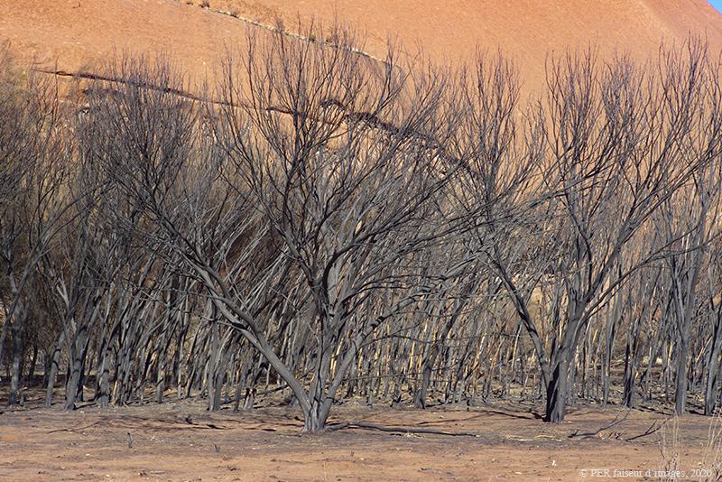 Pleins feux sur l'Australie (2)