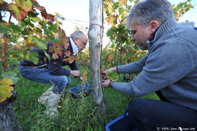 Troglos, vins et … Hollande